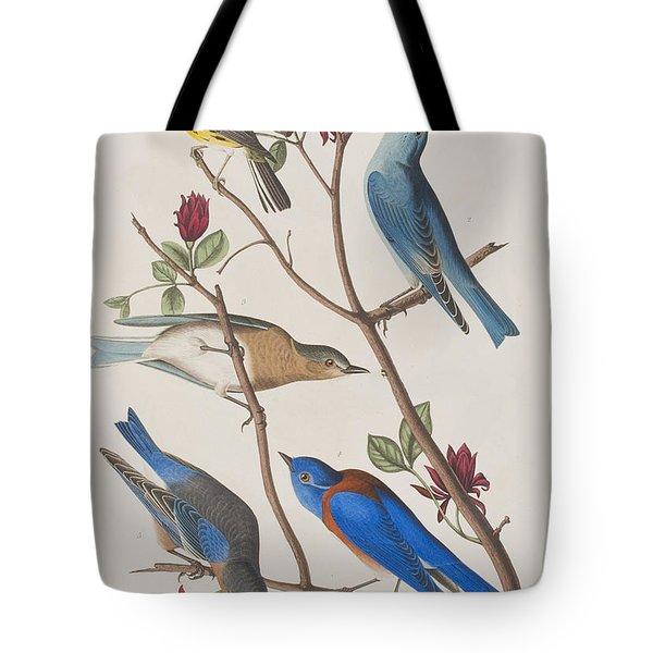 Western Blue-bird Tote Bag