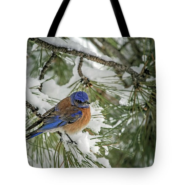 Western Bluebird In A Snowy Pine Tote Bag