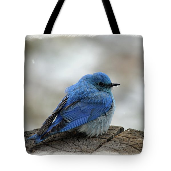 Western Bluebird On Cold Day Tote Bag