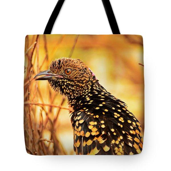 Western Bowerbird Tote Bag