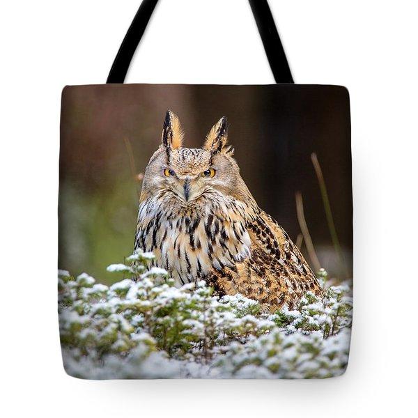 Western Siberian Owl Tote Bag