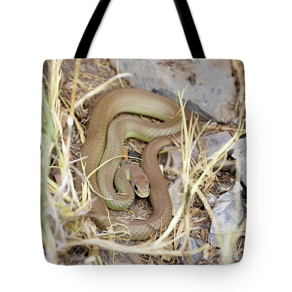 Western Yellow-bellied Racer, Coluber Constrictor Tote Bag
