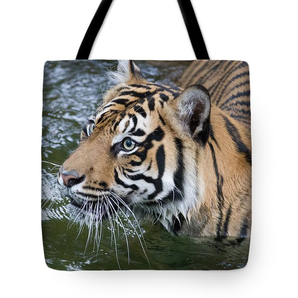 Wet And Wild 1 Tote Bag