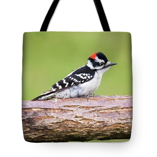 Tote Bag featuring the photograph Wet Downy Woodpecker  by Ricky L Jones