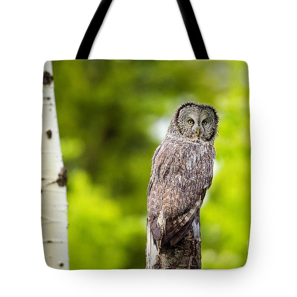 Tote Bag featuring the photograph Wet Feathers by Aaron Whittemore