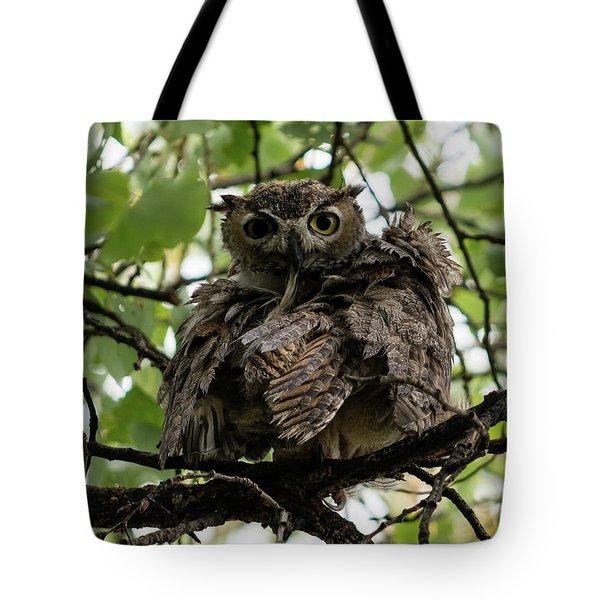 Wet Owl Tote Bag