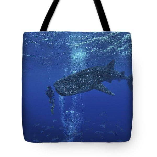 Whale Shark And Diver, Maldives Tote Bag by Mathieu Meur