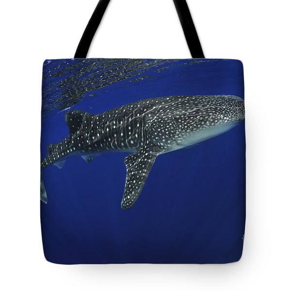 Whale Shark Near Surface With Sun Rays Tote Bag by Mathieu Meur