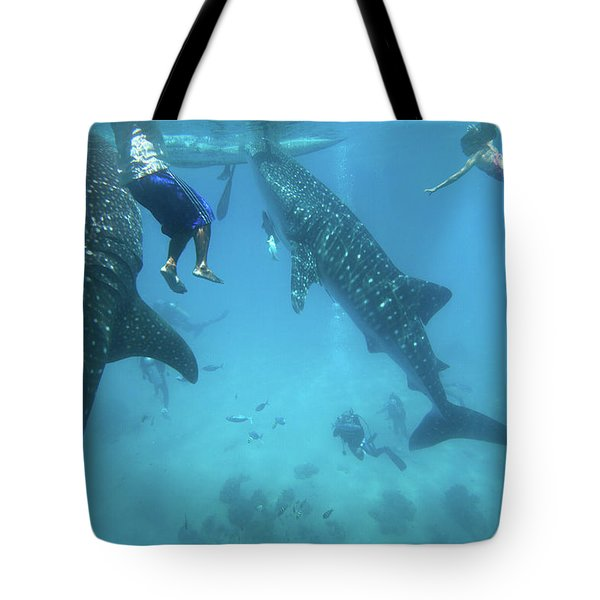 Whale Sharks Tote Bag