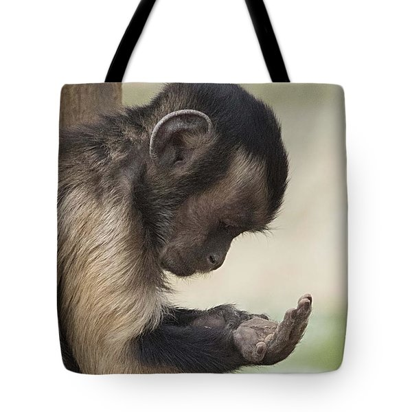 What Have We Here Tote Bag by Anne Rodkin