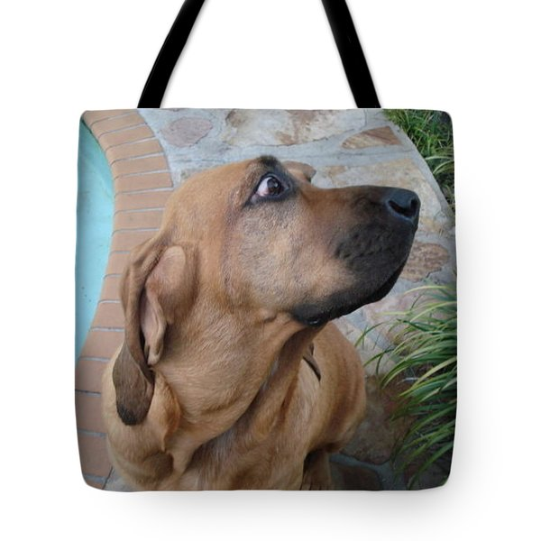 What Was That Tote Bag by Val Oconnor