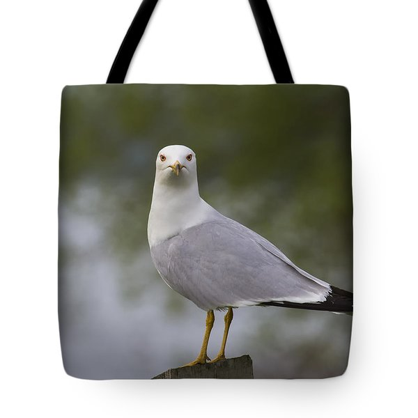 What'cha Lookin' At Tote Bag