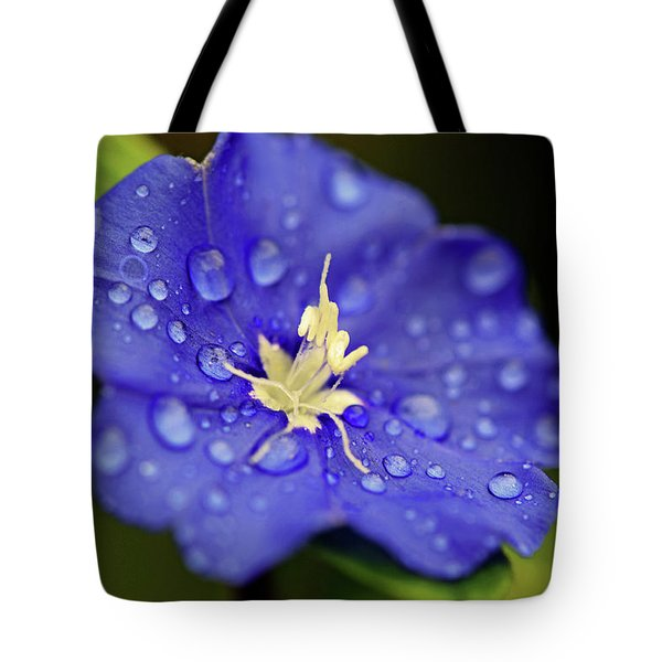 Tote Bag featuring the photograph When Old Becomes New by Melanie Moraga