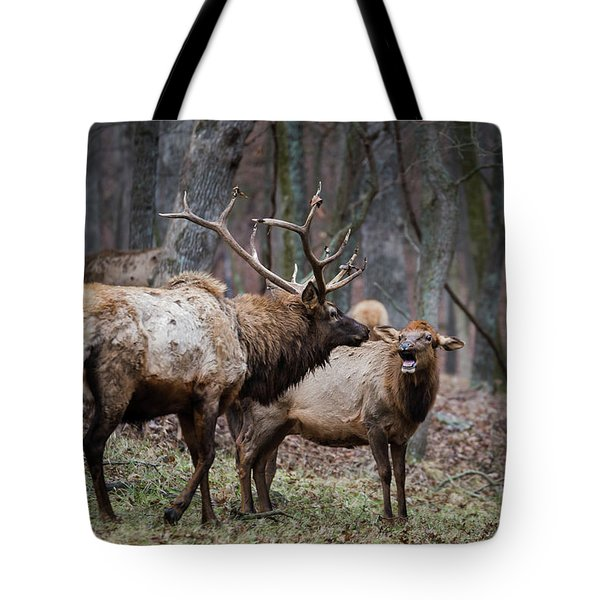 Tote Bag featuring the photograph Where Have You Been? by Andrea Silies