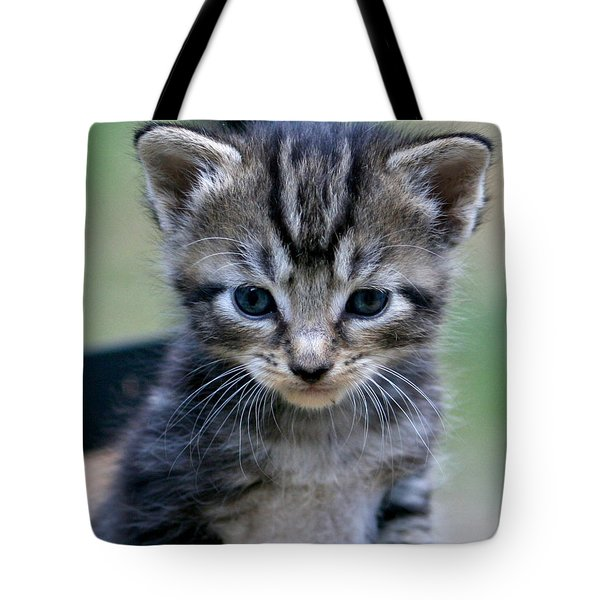 Whiskers Tote Bag by Cathy Harper