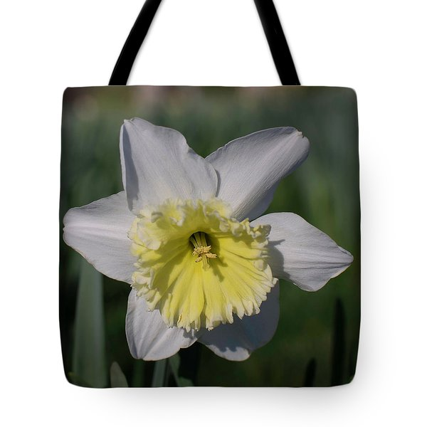 Tote Bag featuring the photograph White And Yellow Daffodil by Keith Smith