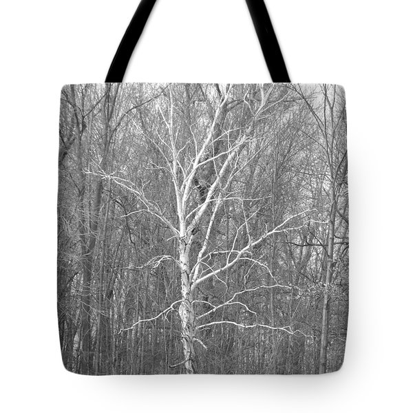 White Birch In Bw Tote Bag by Erick Schmidt