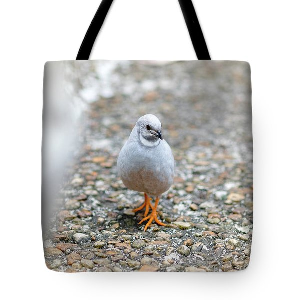 White Bird Sneaking Through Tote Bag