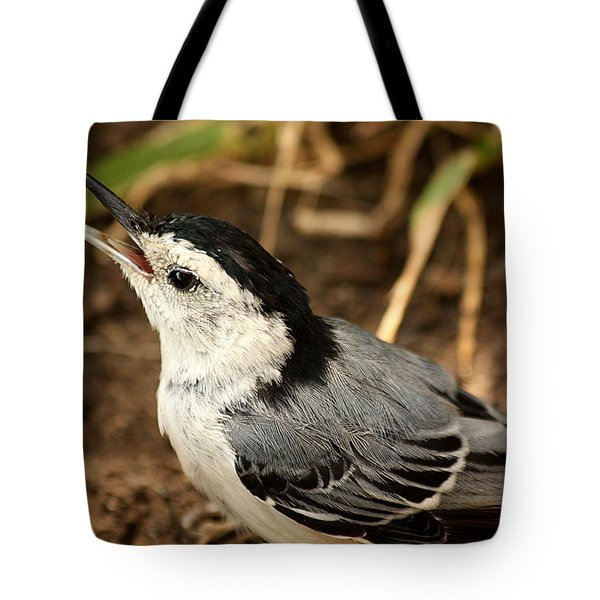 White Breasted Nuthatch 2 Tote Bag