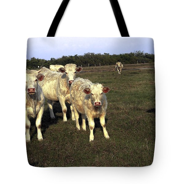 White Cows Tote Bag by Sally Weigand