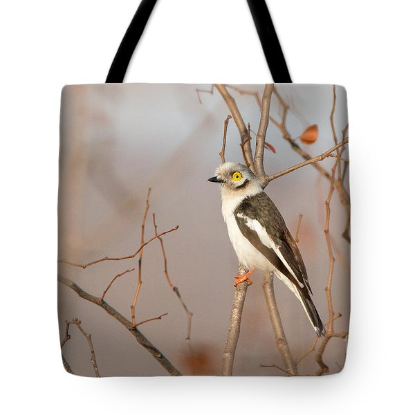 Tote Bag featuring the photograph White-crested Helmet-shrike - Bagadais Casque - Prionops Plumatus by Nature and Wildlife Photography