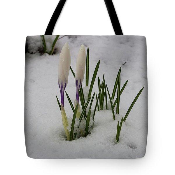 White Crocus In Snow Tote Bag