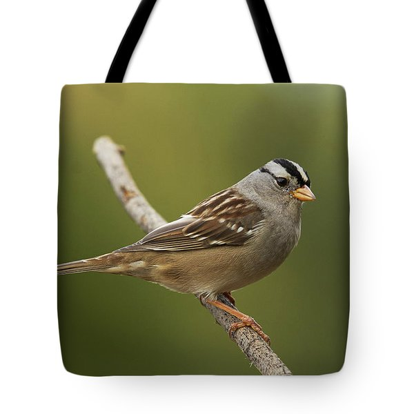 White-crowned Sparrow Tote Bag by Doug Herr