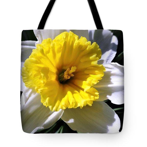 White Daffodil Closeup Tote Bag