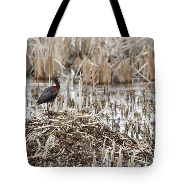 White-faced Ibis 2017-1 Tote Bag