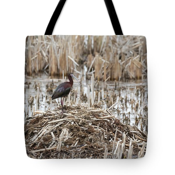 White-faced Ibis 2017-1 Tote Bag by Thomas Young