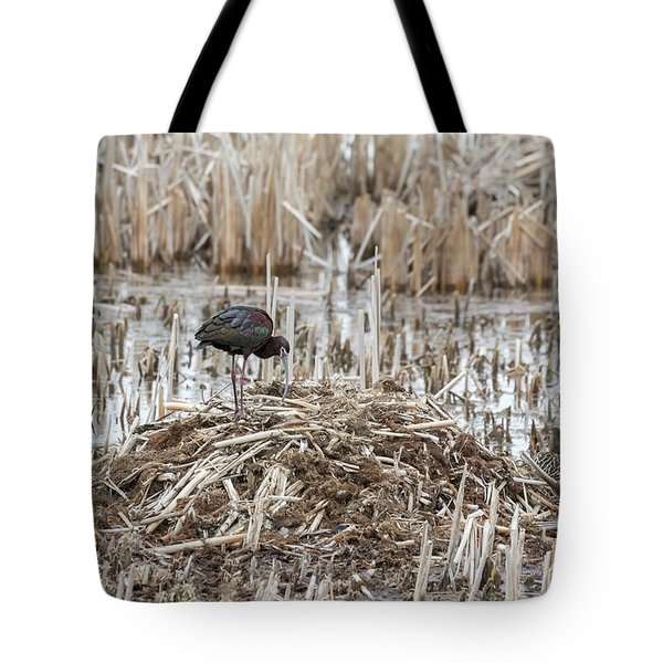 White-faced Ibis 2017-2 Tote Bag