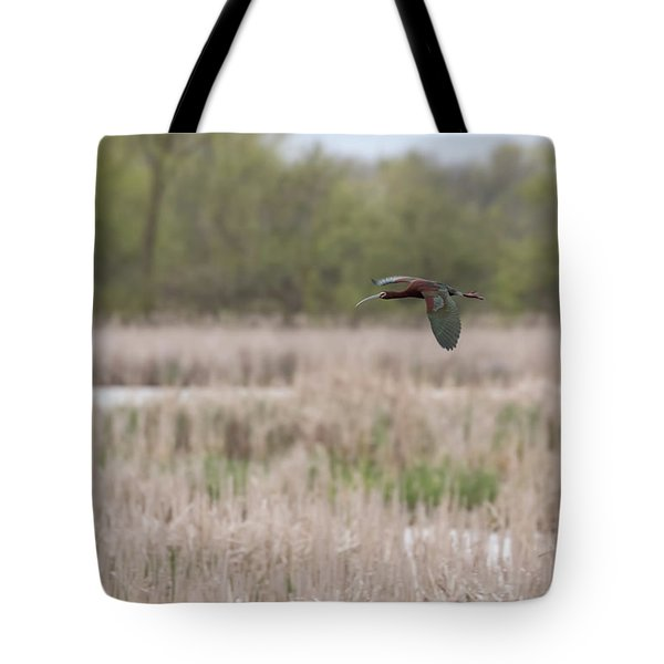 White-faced Ibis 2017-3 Tote Bag