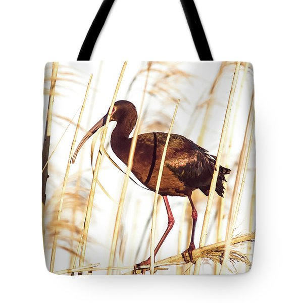 Tote Bag featuring the photograph White Faced Ibis In Reeds by Robert Frederick