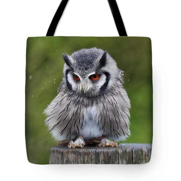 White Faced Owl Tote Bag