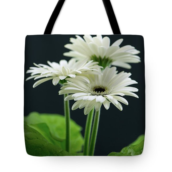 White Gerbers Tote Bag