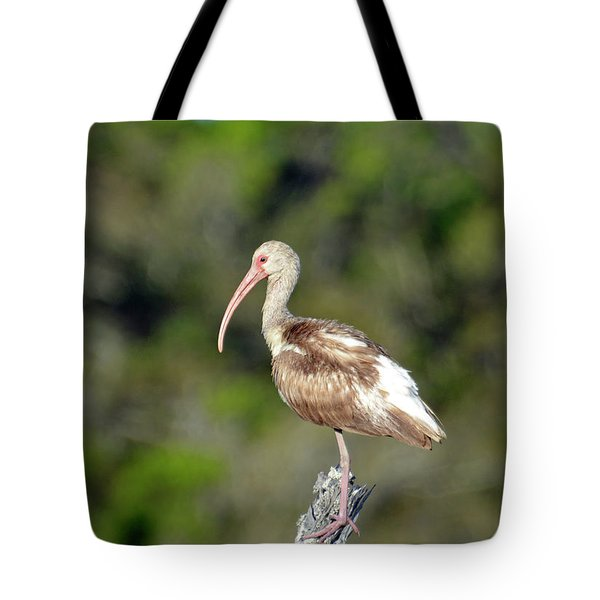 White Ibis In Jekyll Island Marsh Tote Bag by Bruce Gourley