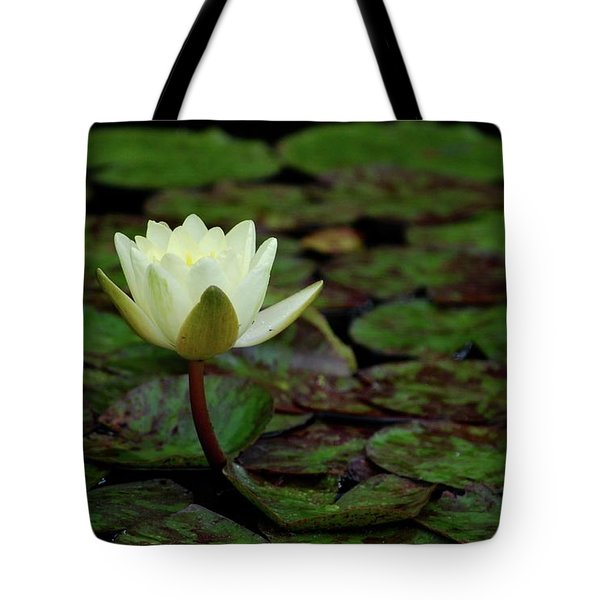 Tote Bag featuring the photograph White Lily In The Pond by Amee Cave