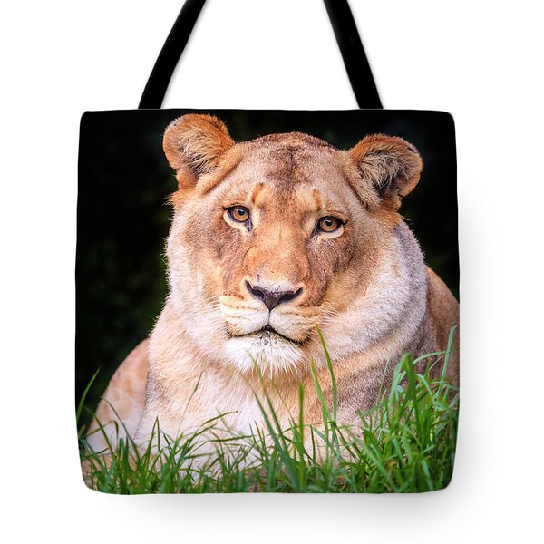 Tote Bag featuring the photograph White Lion by Alexey Stiop