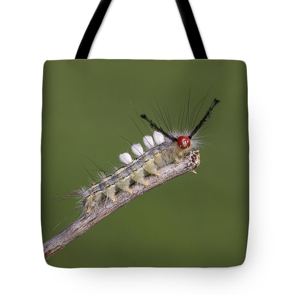 White-marked Tussock Moth Tote Bag by David Lester