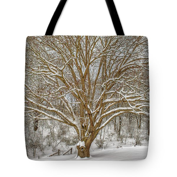 White Oak In Snow Tote Bag