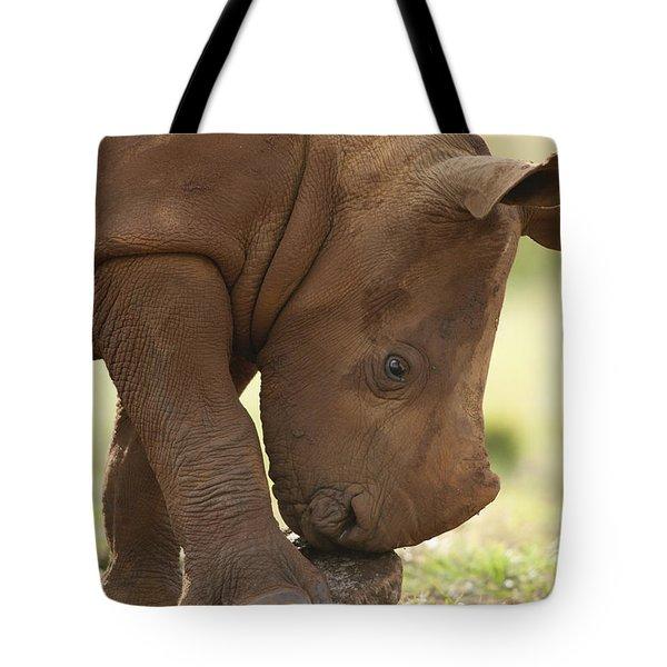 White Rhinoceros Ceratotherium Simum Tote Bag by Matthias Breiter