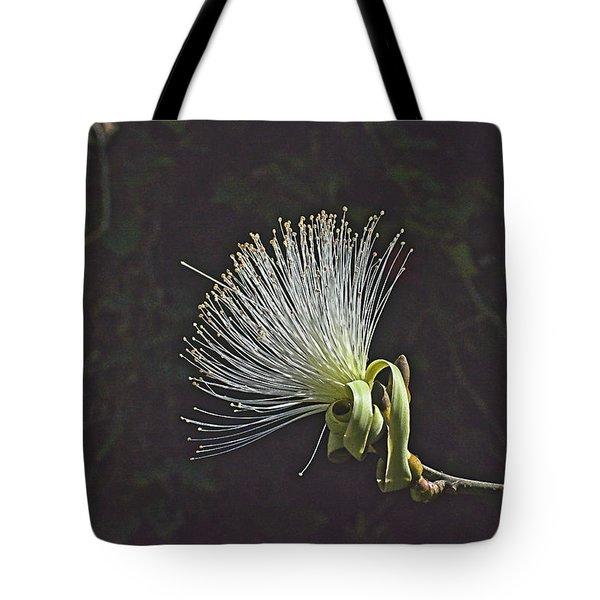 White Shaving Brush Pseudobombax Flower Tote Bag