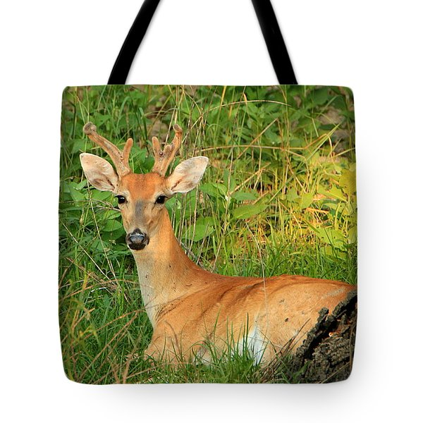 White-tail Buck Resting Tote Bag