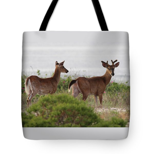 White Tail Deer Port Jefferson New York Tote Bag