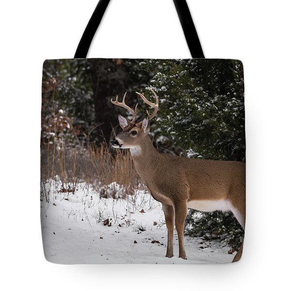 White-tailed Deer - 8904 Tote Bag