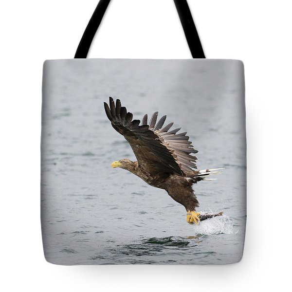 Tote Bag featuring the photograph White-tailed Eagle Catching Dinner by Karen Van Der Zijden