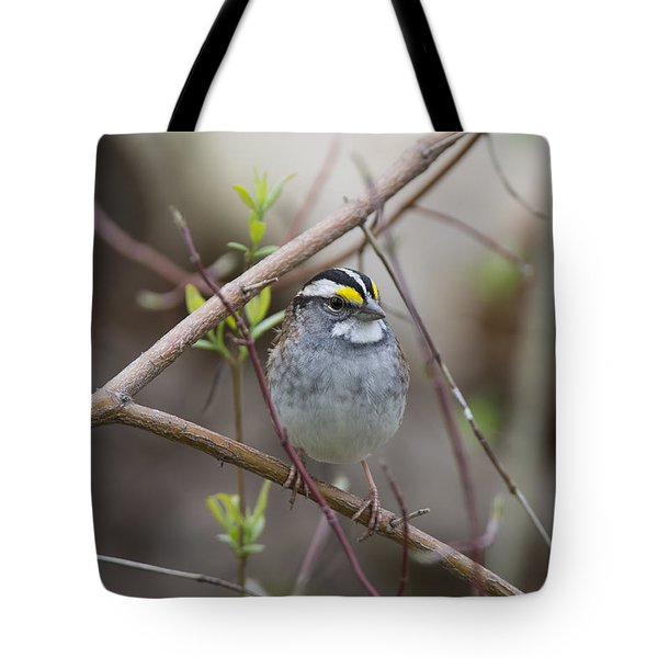 White Throat Tote Bag