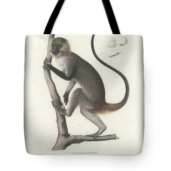 White Throated Guenon, Cercopithecus Albogularis Erythrarchus Tote Bag