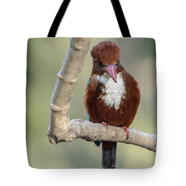 White-throated Kingfisher 01 Tote Bag