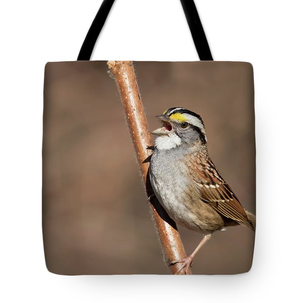 Tote Bag featuring the photograph White-throated Sparrow by Mircea Costina Photography